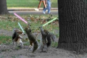 star wars squirrels