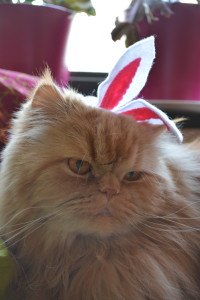 Alonzo Bunny!