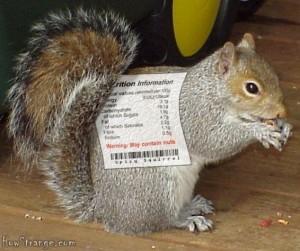 nutritional squirrel