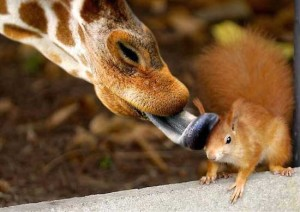 squirrel getting giraffe bath
