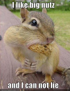 big-nuts squirrel
